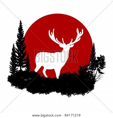 animal of wildlife (deer)