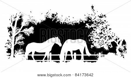 Animal of wildlife (horse)