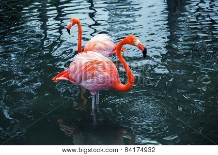 Two Pink Flamingos In Water. Vintage Stylized Photo