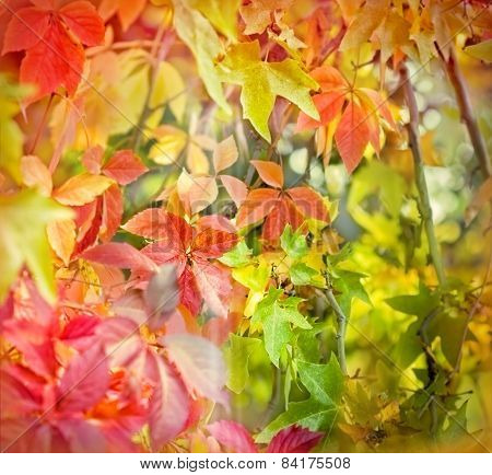 Soft focus on colorful foliage