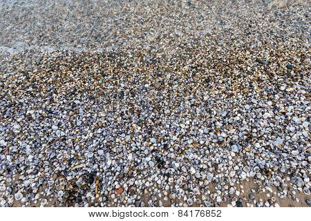 Small Shells On The Beach Of A River From Close