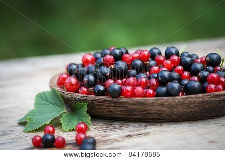 Currant Black Blue And Red In Garden