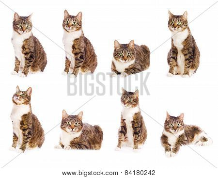 Set Of Cat