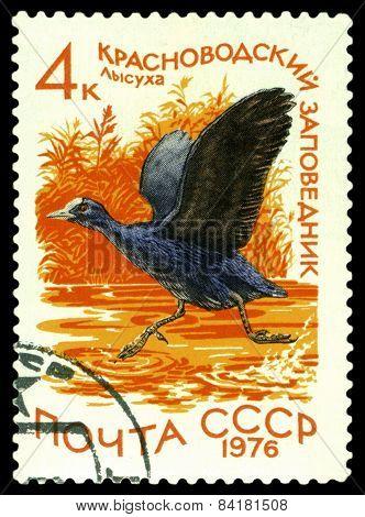 Vintage  Postage Stamp. European Coot.