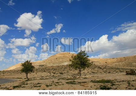 Negev Desert . Mountain  Avdat With Antic  Nabatean City