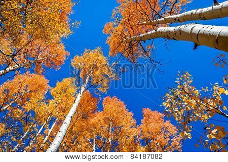 Colorful Aspen