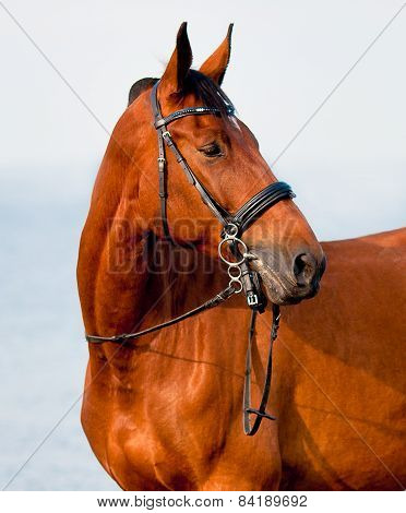 Close-up Portrait Of Bay Horse