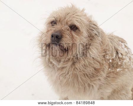 Hairy Little Dog