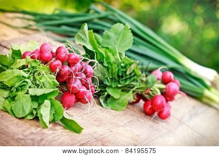 Organic spring radishes and spring onions