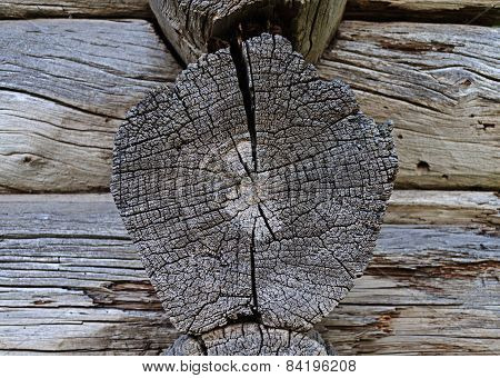 Cracked Butt-end Of Log