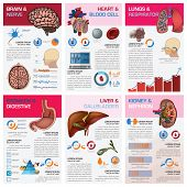 stock photo of flat stomach  - Internal Human Organ Health And Medical Chart Diagram Infographic Design Template - JPG