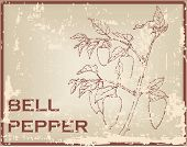 picture of pepper  - Bell pepper also known as sweet pepper or a pepper and capsicum - JPG
