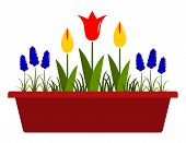 image of planters  - vector spring flowers in planter isolated on white background - JPG