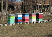 picture of bee-hive  - Bee Hive boxes on the field - JPG
