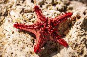 stock photo of starfish  - starfish on a stone caught starfish - JPG
