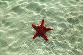 image of starfish  - starfish on a stone caught starfish - JPG