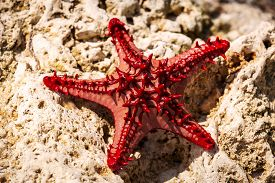 picture of starfish  - starfish on a stone caught starfish - JPG
