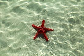 stock photo of starfish  - starfish on a stone caught starfish - JPG