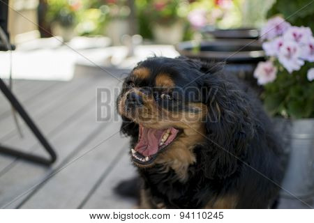 The Happy Puppy