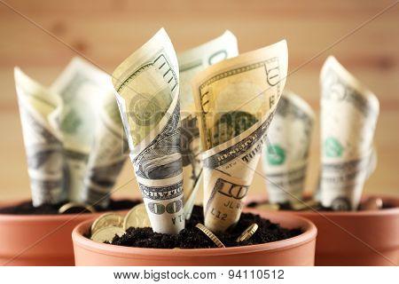 Growing money in flowerpots close up