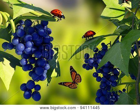 Ladybug on a leaf of grapes.