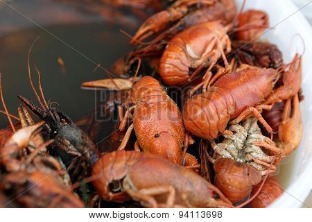 Pan With Boiled Crayfish