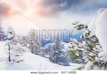 Snow-covered Trees In The Mountains At Sunset