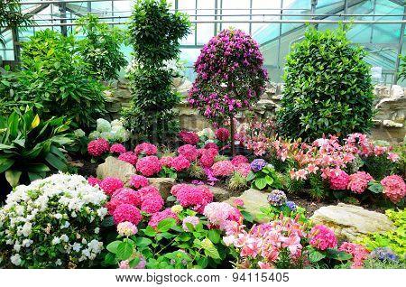 Pink, White And Blue Flowers In Palmen Garten, Frankfurt Am Main