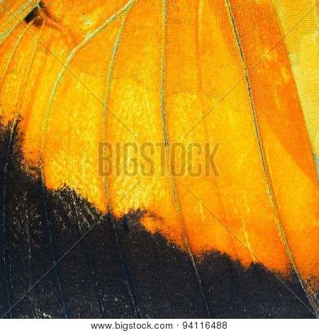 Orange Butterfly Wing