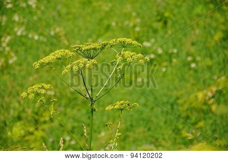 Colorful Fresh Green Plant In A Green Background, Sergiev Posad, Moscow Region, Russia