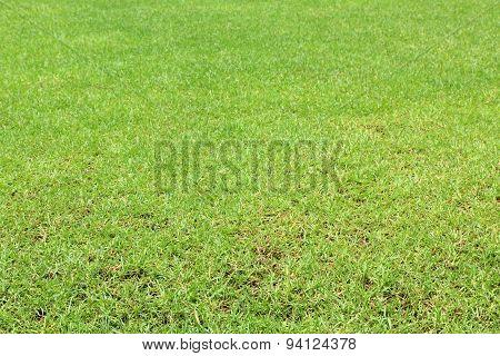 Green natural lawn grass