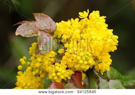 Spring Yellow Flowers In Fulda, Hessen, Germany