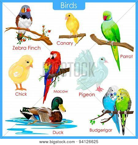 Chart of colorful birds