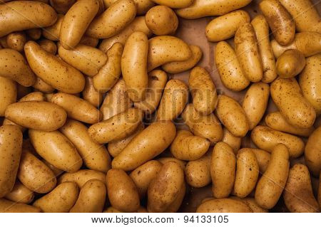 Full Frame Background With Lots Of New Potatoes