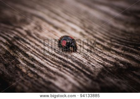 Black Ladybug Walking Along A Weathered Old Wooden Serface