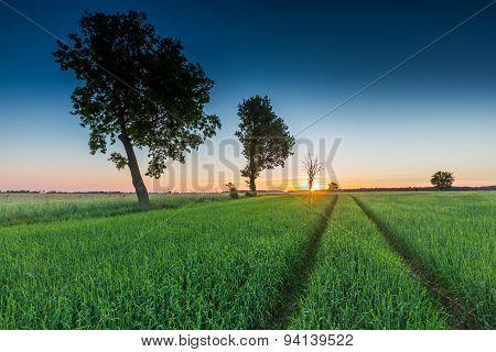 Beautiful Landscape Of Green Rye Field