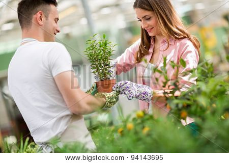 Young gardeners tending a plant in greenhouse