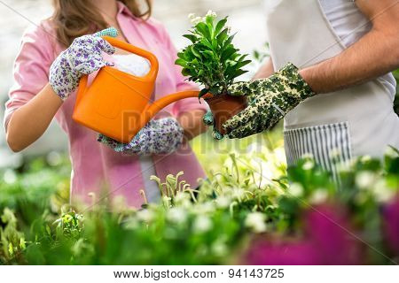 woman watering flowers in glasshouse close up