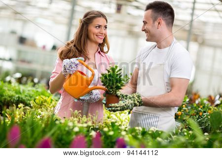 Young workers water flowers in hothouse