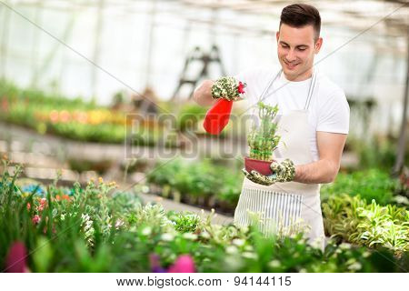 Happy florist watering bamboo in greenhouse