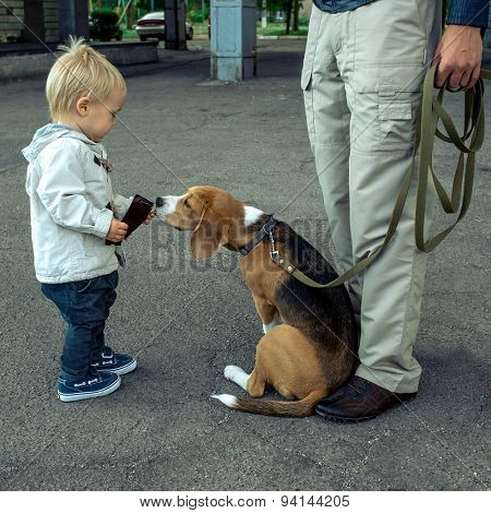 Child fun with beagle dog.