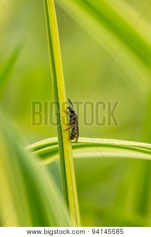 Wasp on a stalk