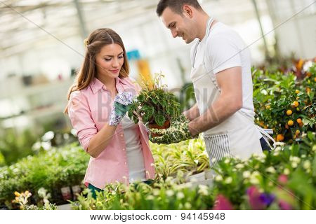 Workers in process of tending a plant in hothouse