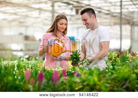 Couple working in greenhouse with flowers