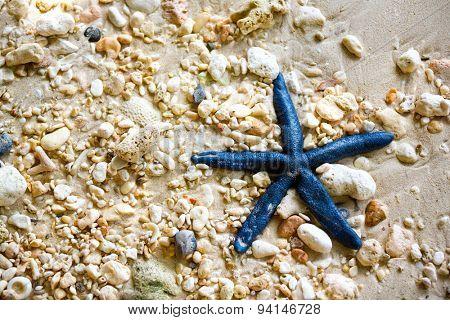 blue starfish on the pebble beach