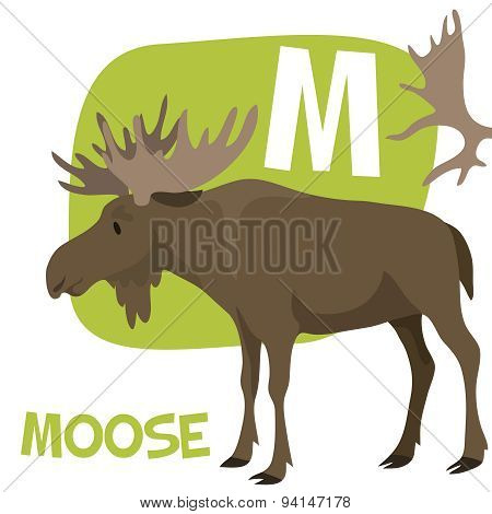 Funny cartoon animals vector alphabet letter set for kids. M is Moose.