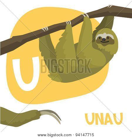 Funny cartoon animals vector alphabet letter set for kids. U is Unau