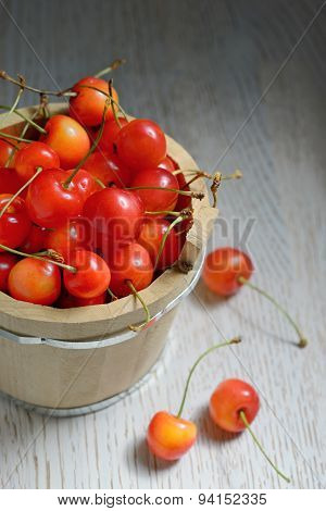 Sweet Cherries In Bucket