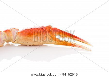 Red Crab Claws On White Background