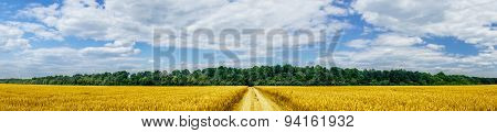 Panorama Of Golden Wheat Field.